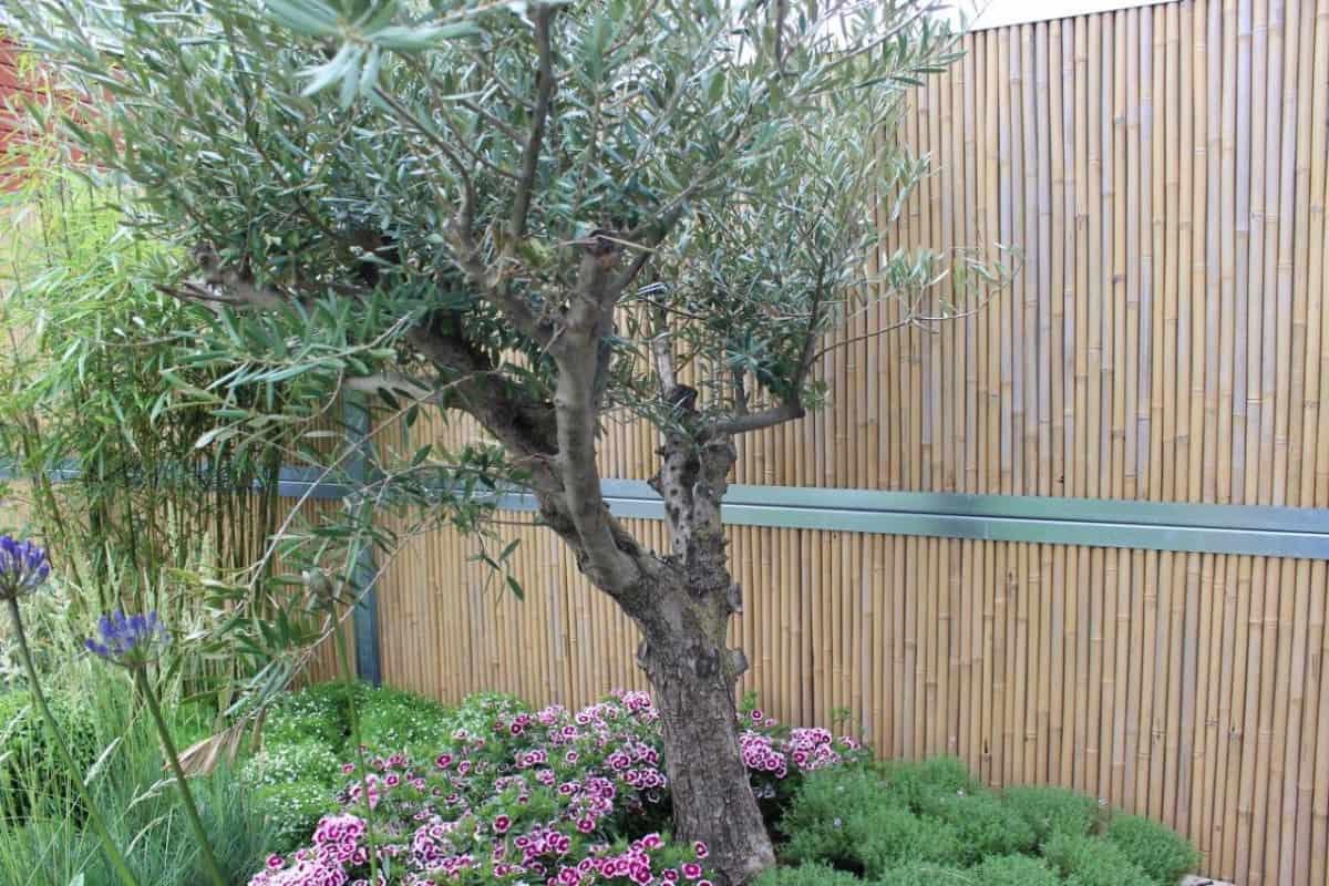 bamboowall-geluidsscherm
